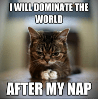 It's well earned naps for cats as keeping humans amused might be exhausting. #cats # animals # cute animals #tired animals # naps # naps memes # animal memes: I WILL DOMINATE THE  WORLD  AFTER MY NAP It's well earned naps for cats as keeping humans amused might be exhausting. #cats # animals # cute animals #tired animals # naps # naps memes # animal memes