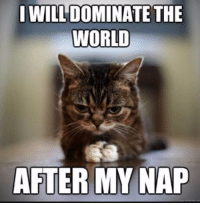 I WILL DOMINATE THE  WORLD  AFTER MY NAP The evil plan