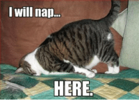 """The """"holidays are finally over"""" feeling...: I will nap...  HERE The """"holidays are finally over"""" feeling..."""