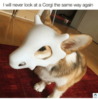 Magiquiz: I will never look at a Corgi the same way again  MagiQuiz