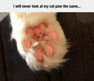 daily-meme:  They All Have A Bear Pawhttp://daily-meme.tumblr.com/: I will never look at my cat paw the same... daily-meme:  They All Have A Bear Pawhttp://daily-meme.tumblr.com/