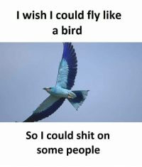 Memes, Shit, and 🤖: I wish I could fly like  a bird  So I could shit on  some people SuperTroll