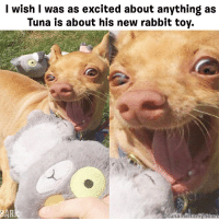 Memes, Rabbit, and 🤖: I wish I was as excited about anything as  Tuna is about his new rabbit toy.  BAR  unameltsnyhear Things are about to get real fluffy. destroyersclub dogpeoplegetit @tunameltsmyheart