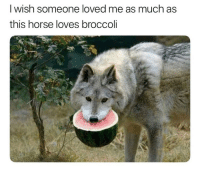 Fucking, Horse, and Dank Memes: I wish someone loved me as much as  this horse loves broccoli If you aren't following @8memesofficial you're fucking up
