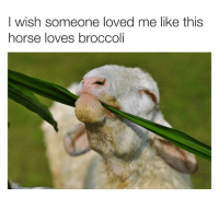 Bear, Horse, and Broccoli: I wish someone loved me like this  horse loves broccoli