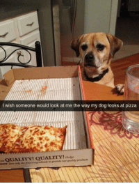 Pizza, Dog, and Top: I wish someone would look at me the way my dog looks at pizza  QUALITY! QUALITY! tdse  mas wies only the finest ingredients to provide top-quality products