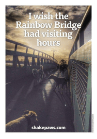 This photograph was taken a year ago and sadly one of my friend's is no longer with us. But I have this to remember the happy days: I wish the  Rainbow Bridge  had visiting  hours  shake paws.com This photograph was taken a year ago and sadly one of my friend's is no longer with us. But I have this to remember the happy days