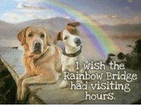 We all would wish for this.: I wish the  Rainbow Bridge  had visiting  hours. We all would wish for this.