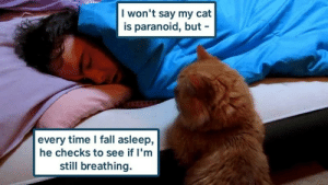 still breathing: I won't say my cat  is paranoid, but -  every time I fall asleep,  he checks to see if I'm  still breathing.