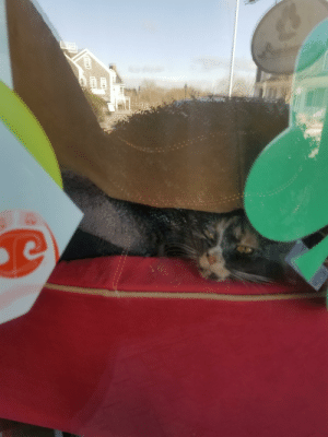I work at a pet store, and we couldn't find our store kitty. Well, I was outside cleaning the windows, and I found her hiding spot. She has bee squeezing herself in between the stacks of dog beds and taking naps.: I work at a pet store, and we couldn't find our store kitty. Well, I was outside cleaning the windows, and I found her hiding spot. She has bee squeezing herself in between the stacks of dog beds and taking naps.