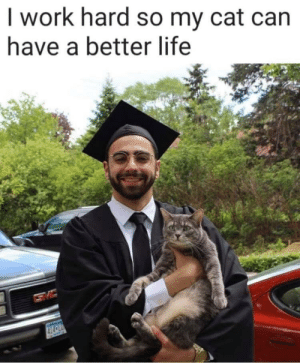 New goal for life: I work hard so my cat can  have a better life  414CLD New goal for life