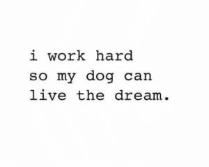 Dank, Work, and Live: i work hard  so my dog cain  live the dream.