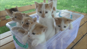 Blue, Orange, and Text: I would like to report an issue with the subreddit. The upvote button is blue and the downvote button is orange. (Random kitten picture because I can't post text.)