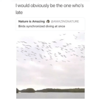 Birds, Nature, and Girl Memes: I would obviously be the one who's  late  Nature is Amazing @AMAZINGNATURE  Birds synchronized diving at once goodnight