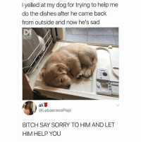 Ali, Bitch, and Memes: I yelled at my dog for trying to help me  do the dishes after he came back  from outside and now he's sad  ali  @LebaenesePapi  BITCH SAY SORRY TO HIM AND LET  HIM HELP YOU He can lick all the dishes