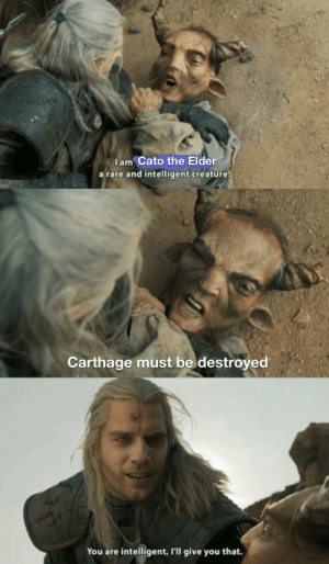 Witcher meme meta is coming: Iam Cato the Elder  a rare and intelligent creature!  Carthage must be destroyed  You are intelligent, l'll give you that. Witcher meme meta is coming