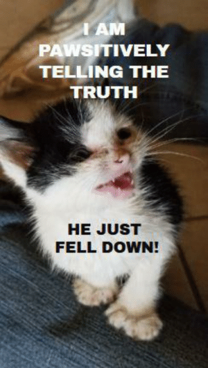 Cry-Baby, Truth, and Baby: IAM  PAWSITIVELY  TELLING THE  TRUTH  HE JUST  FELL DOWN! @IamPawsitively 24 toed Polydactyl kitten (rescued - runt- cry baby- just 4 weeks young)