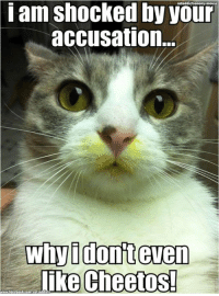 Cheetos, Cute, and Memes: iam shocked by your  accusation.  Why dont even  like Cheetos! Ok, ok I know it looks like mustard but come on, it's cute!