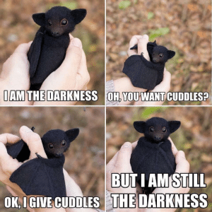 I'm sure it's been shared before but I'm loving this!: IAM THE DARKNESS OH, YOUWANT CUDDLES?  BUTI AM STILL  OK IGIVE CUDDLES THE DARKNESS I'm sure it's been shared before but I'm loving this!