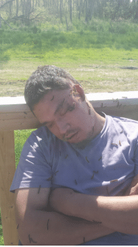 Funny, Caterpillar, and Buddy: / IANA Buddy passed out during tent caterpillar infestation