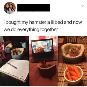 I aspire to have this kind of friendship in my life ❤️.: ibought my hamster a lil bed and now  we do everything together I aspire to have this kind of friendship in my life ❤️.