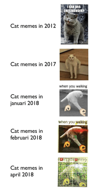 👌🅱️hen you wal🅱️ing tho 👌😂👌: ICAN HAS  CHEEZBURGER?  Cat memes in 2012  Cat memes in 2017  when you walking  Cat memes in  januari 2018  when you walking  Cat memes in  februari 2018  Cat memes in  april 2018 👌🅱️hen you wal🅱️ing tho 👌😂👌