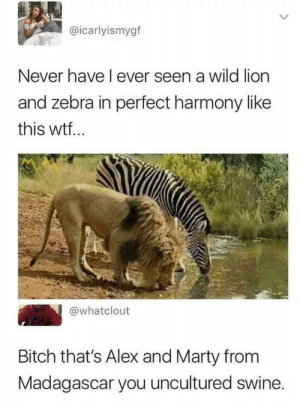 Bitch, Wtf, and Lion: @icarlyismygf  Never have l ever seen a wild lion  and zebra in perfect harmony like  this wtf  @whatclout  Bitch that's Alex and Marty from  Madagascar you uncultured swine. Madagascar!