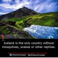 country: Iceland is the only country without  mosquitoes, snakes or other reptiles.  団/d.dyouknowpagel  G@didyouknowpage