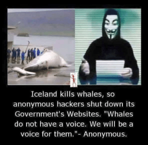 "holsom hakurz: Iceland kills whales, so  anonymous hackers shut down its  Government's Websites. ""Whales  do not have a voice. We will be a  voice for them.""- Anonymous. holsom hakurz"