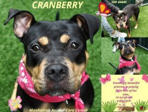 Id 44440 Cranberry Stunningly Beautiful Princess Is