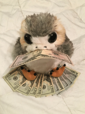 Money, Tumblr, and Blog: ID0193  3885 D thefingerfuckingfemalefury:  aristo-kitty: The money porg wishes you success this year :D Thank u Money Porg!