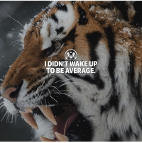 Goals, Memes, and Back: IDIDN'T WAKE UP  TO BEAVERAGE If you woke up without agoal and to be average you better get back under your bed!💯 - average goals millionairementor