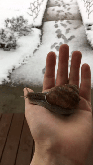 Bailey Jay, Dogs, and Gif: idimmadontgiveashit: pigcatapult:  spidersonline: It SNOWED in MISSISSIPPI!!! It ended up being the heaviest snow since the 1880s! Anyway I saw a lot of people making videos of their dogs experiencing snow for the first time so this happened I love that snails can cringe so hard their entire face disappears  *a snail expirencing snow for the first time*