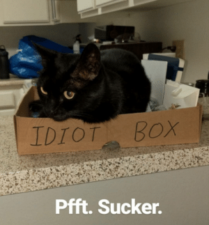 Cats, Idiot, and Box: IDIOT BOX  Pfft. Sucker. Owned