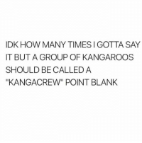 "How Many Times, Memes, and Say It: IDK HOW MANY TIMES I GOTTA SAY  IT BUT A GROUP OF KANGAROOS  SHOULD BE CALLED A  ""KANGACREW"" POINT BLANK 😂😂 y'all need to check out @sigh for the funniest content on ig 😆 @sigh @sigh @sigh mmsip"