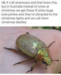 Christmas, Memes, and Australia: idk if y'all americans and that know this,  but in Australia instead of snow at  christmas we get these lil shiny bugs  everywhere and they're attracted to the  christmas lights and we call them  christmas beetles Something Australian that isn't design to kill and attack? What?!