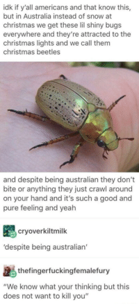 "Christmas, Love, and Yeah: idk if y'all americans and that know this,  but in Australia instead of snow at  christmas we get these lil shiny bugs  everywhere and they're attracted to the  christmas lights and we call them  christmas beetles  and despite being australian they don't  bite or anything they just crawl around  on your hand and it's such a good and  pure feeling and yeah  cryoverkiltmilk  'despite being australian  thefingerfuckingfemalefury  ""We know what your thinking but this  does not want to kill you"" I love them to bits"