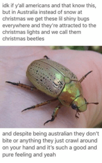 Christmas, Memes, and Australia: idk if y'all americans and that know this,  but in Australia instead of snow at  christmas we get these lil shiny bugs  everywhere and they're attracted to the  christmas lights and we call them  christmas beetles  and despite being australian they don't  bite or anything they just crawl around  on your hand and it's such a good and  pure feeling and yealh
