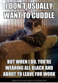 Submitted by Charlie Gregor: IDO  WANT TO CUDDLE  BUT WHEN I DO, YOU'RE  WEARING ALL BLACK AND  ABOUT TO LEAVE FOR WORK  SHARED ONI M NOT RIGHT IN THE HEAD.COM Submitted by Charlie Gregor