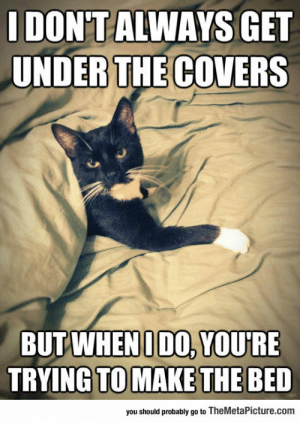 lolzandtrollz:  Cats Will Never Change: IDONT ALWAYS GET  UNDER THE COVERS  BUT WHEN IDO, YOURE  TRYING TO MAKE THE BED  you should probably go to TheMetaPicture.com lolzandtrollz:  Cats Will Never Change
