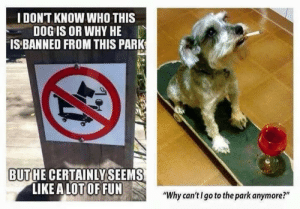 "My kind of friend: IDONT KNOW WHO THIS  DOG IS OR WHY HE  IS BANNED FROM THIS PARK  BUTHE CERTAINLYSEEMS  LIKE A LOT OF FUN  ""Why can'tI go to the park anymore?"" My kind of friend"