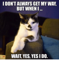 Memes, 🤖, and Page: IDONTALLWAYS GET MY WA,  BUT WHEN I  WAIT YES, YES IDO For more cute pics LIKE us at The Purrfect Feline Page