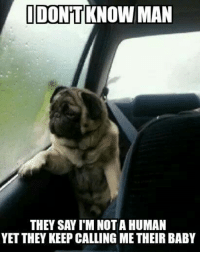 Memes, Pugs, and 🤖: IDONTKNOWMAN  THEY SAY l'M NOT A HUMAN  YETTHEY KEEP CALLING METHEIR BABY Introspective Pug