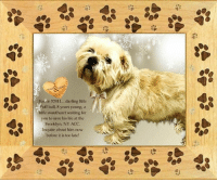 Animals, Desperate, and Dogs: ie 52811... darling little  luff ball, 8 years young, a  ittle sweetheart waiting for  you to save his life at the  Brooklyn, NY ACC.  Inquire about him now  before it is too late! **FOSTER or ADOPTER NEEDED ASAP**  Fozzie 52811... darling little fluff ball, 8 years young, a little sweetheart waiting for you to save his life at the Brooklyn, NY ACC. Inquire about him now before it is too late!  ✔Pledge✔Tag✔Share✔FOSTER✔ADOPT✔Save a life!  Fozzie 52811 Small Mixed Breed Sex male Age 8 yrs (approx.) - 28 lbs My health has been checked.  My vaccinations are up to date. My worming is up to date.  I have been micro-chipped.  I am waiting for you at the Manhattan, NY ACC. Please, Please, Please, save me!  ****************************************** To FOSTER or ADOPT,  SPEAK UP NOW & Save a Life:  Direct Adopt from the ACC Or Apply with rescues Or Message Must Love Dogs - Saving NYC Dogs for assistance ASAP!!! ******************************************  The general rule is to foster you have to be within 4 hours of the NYC ACC approved New Hope partner rescues you are applying with and to adopt you will have to be in the general NE US area; NY, NJ, CT, PA, DC, MD, DE, NH, RI, MA, VT & ME (some rescues will transport to VA) UNLESS you can get to the shelter IN PERSON.  ****************************************** ... NOTE: *** WE HAVE NO OTHER INFORMATION THAN WHAT IS LISTED WITH THIS FLYER *** - For more information or to adopt, please EMAIL adopt@nycacc.org  - SUBJECT Line: ** Dogs Name & ID# **  - Don't forget to add your email address and phone numbers where they can reach you to your email as well. .... RE: ACC site Just because a dog is not on the ACC site does not mean they are safe by any means. There are many reasons for this like a hold or an eval has not been conducted yet or the dog is rescue-only... the list goes on... Please, do share & apply to foster/adopt these pups as well until their thread is updated with their most current st