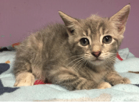 TODAY is Feline Friday! Cat/Kitten adoptions at the shelter are just $1!!: ie TODAY is Feline Friday! Cat/Kitten adoptions at the shelter are just $1!!
