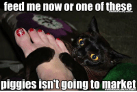 memes: Ieed me now or one of these  cataddictsanony-mouse  piggies isn't going to market