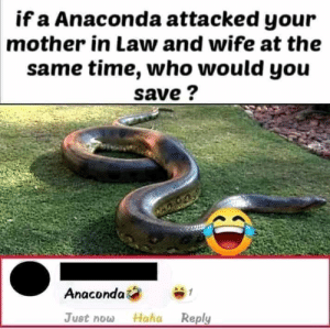 The number of people who laughed at this is disturbing: if a Anaconda attacked your  mother in Law and wife at the  same time, who would you  save ?  Anacondai  Just now  Reply  Haha The number of people who laughed at this is disturbing