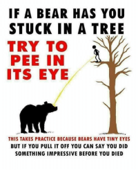 Memes, Bear, and Bears: IF A BEAR HAS YOU  STUCK IN A TREE  TRY TO  PEE IN  ITS EYE  THIS TAKES PRACTICE BECAUSE BEARS HAVE TINY EYES  BUT IF YOU PULL IT OFF YOU CAN SAY YOU DID  SOMETHING IMPRESSIVE BEFORE YOU DIED Spread teh awaerness