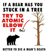 Bear, Death, and Tree: IF A BEAR HAS YOU  STUCK IN A TREE  TRY TO  ATOMIC  ELBOW  BETTER TO DIE A MAN'S DEATH It will be painful but Ill be a legend