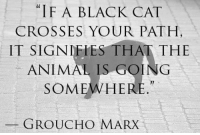 "Tumblr, Animal, and Black: ""IF A BLACK CAT  CROSSES YOUR PATH  IT SIGNIFIES THAT THE  ANIMAL IS GOING  SOMEWHERE.  GROUCHO MARX <p><a href=""https://epicjohndoe.tumblr.com/post/169475061009/to-all-superstitious-people-out-there"" class=""tumblr_blog"">epicjohndoe</a>:</p><blockquote><p>To All Superstitious People Out There</p></blockquote>"